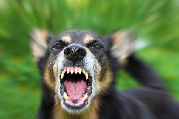 Pourquoi est-il aussi important de déclarer votre chien à votre compagnie d'assurance habitation à Longueuil ou sur la Rive-Sud de Montréal ?