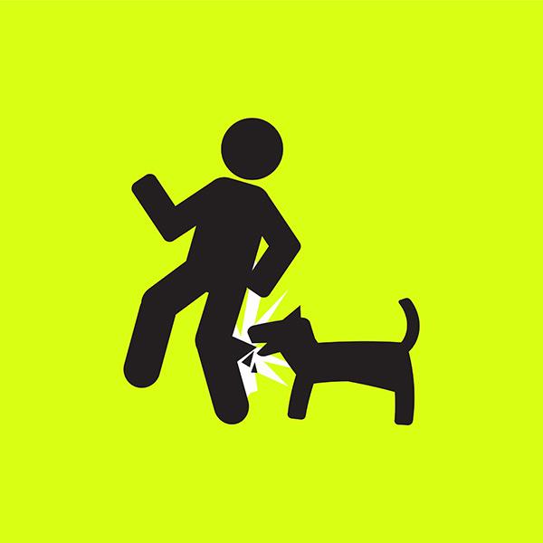 Déclarez votre chien dans votre police d'assurance habitation sur la Côte-Nord pour éviter tout ennui.