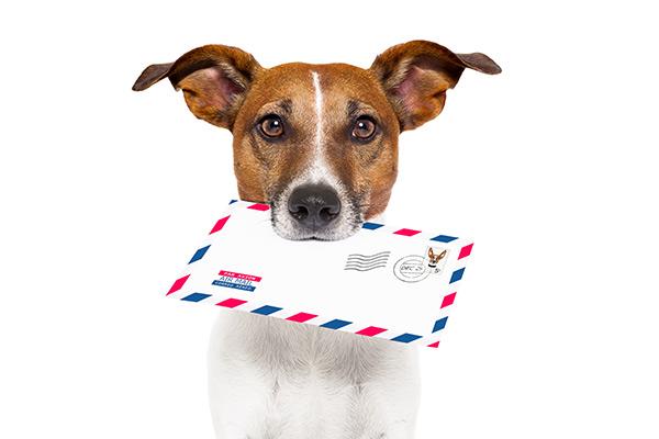 Votre chien mord le facteur, votre assurance habitation sur la Côte-Nord remboursera-t-elle la note?