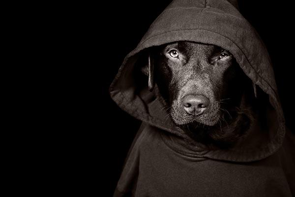 Comprendre l'assurance habitation au Bas-Saint-Laurent ou à Rimouski et les solutions à un chien dit dangereux.