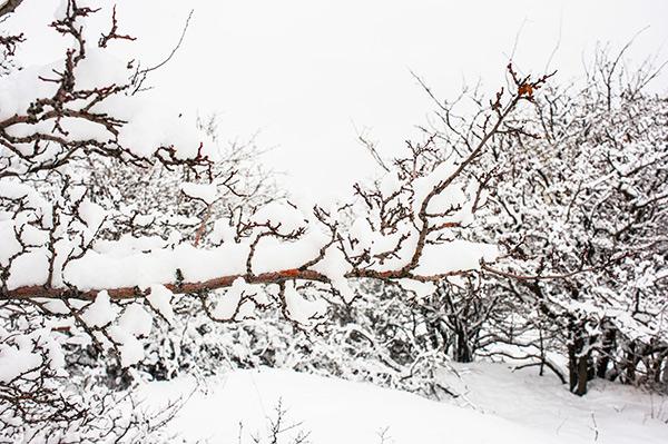 : L'assurance habitation au Bas-Saint-Laurent et l'accumulation de neige.